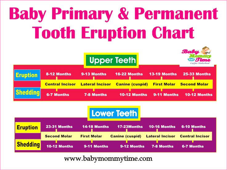 Baby Primary Permanent Tooth Eruption Chart Babymommytime Top Blogs On Care Paing Tips Advice